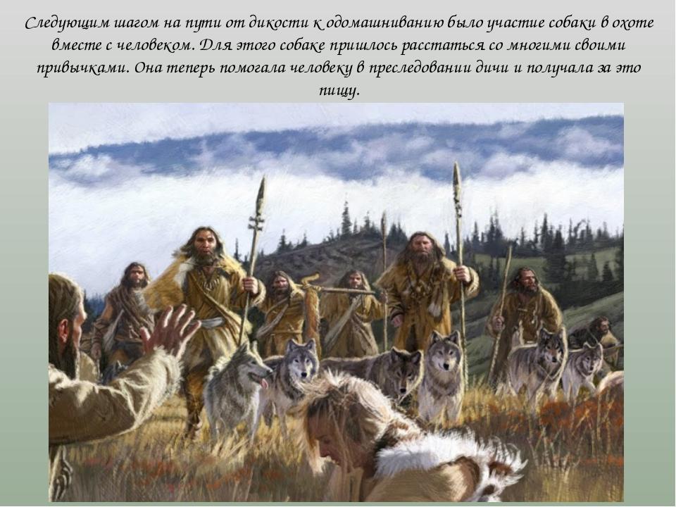 Следующим шагом на пути от дикости к одомашниванию было участие собаки в охот...