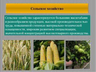 Сельское хозяйство характеризуется большими масштабами и разнообразием продук