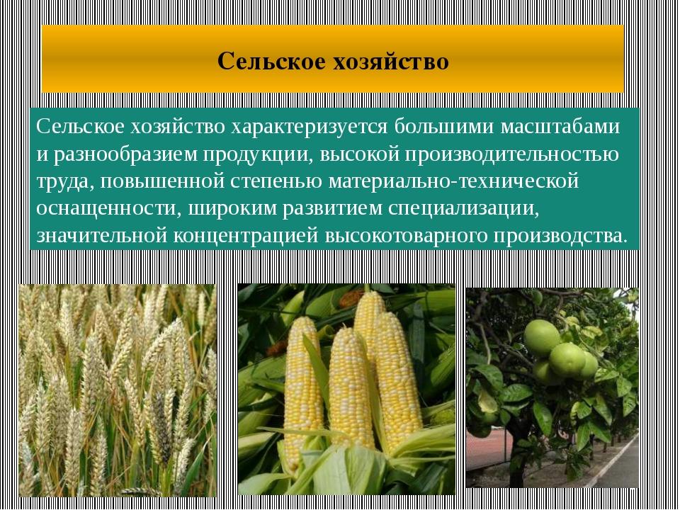 Сельское хозяйство характеризуется большими масштабами и разнообразием продук...