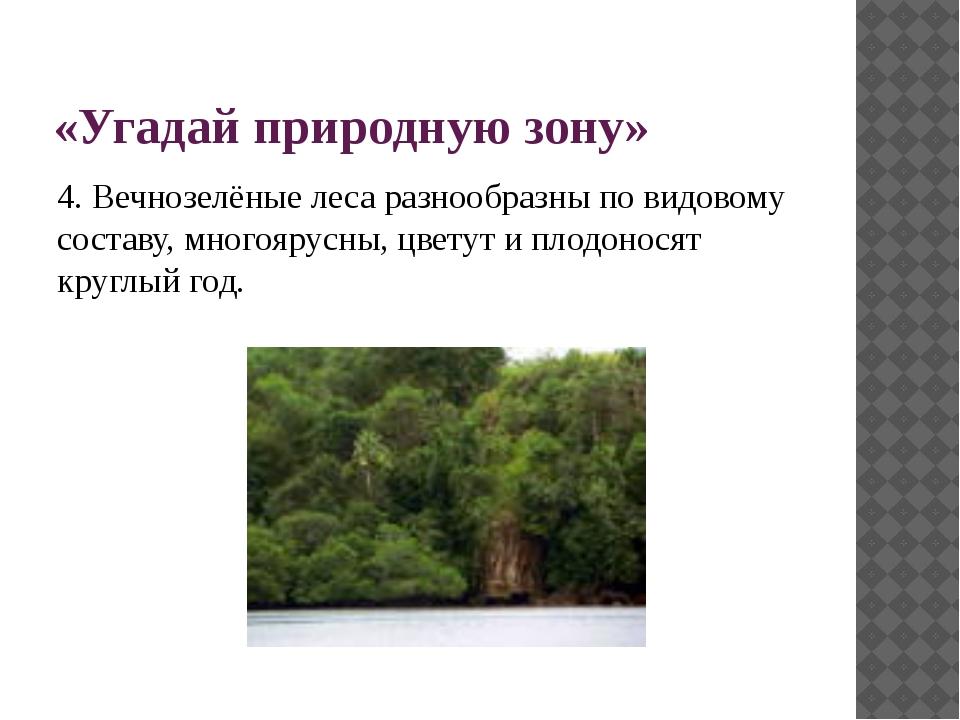 «Угадай природную зону» 4. Вечнозелёные леса разнообразны по видовому составу...