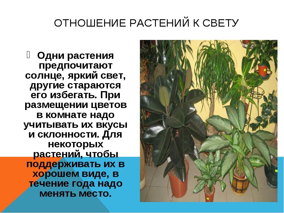 Одни растения предпочитают солнце, яркий свет, другие стараются его избегать....
