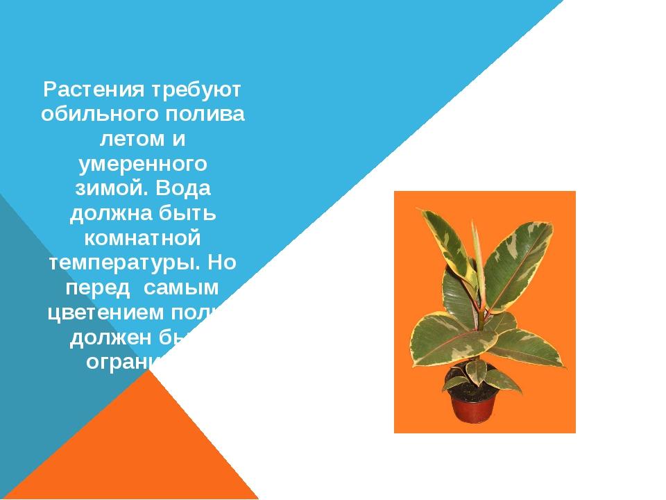 ФИКУС Растения требуют обильного полива летом и умеренного зимой. Вода должна...