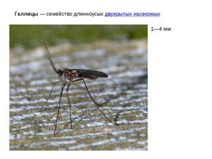 Галлицы— семейство длинноусыхдвукрылых насекомых 1—4мм