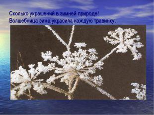 Сколько украшений в зимней природе! Волшебница зима украсила каждую травинку.