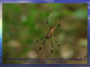 Пауки не являются насекомыми, а принадлежат к классу паукообразных. В отличие