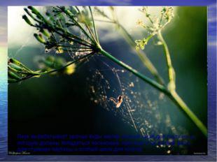 Паук вырабатывает разные виды шелка: липкий шелк для паутины, в которую должн