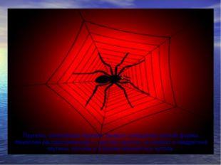 Паутины, сплетаемые пауками, бывают совершенно разной формы. Наиболее распрос