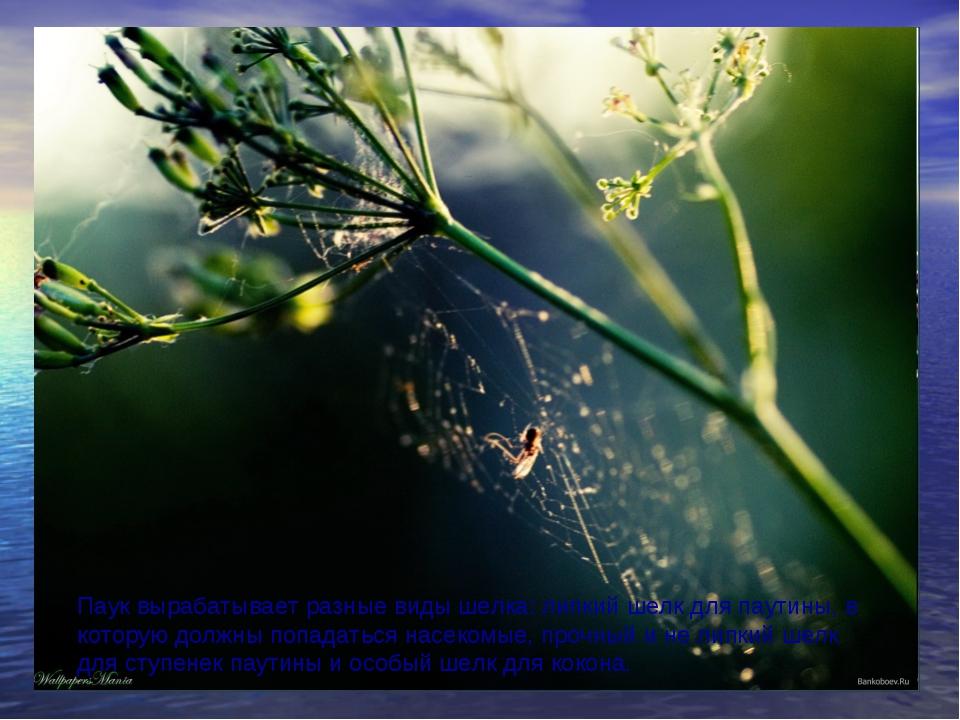 Паук вырабатывает разные виды шелка: липкий шелк для паутины, в которую должн...