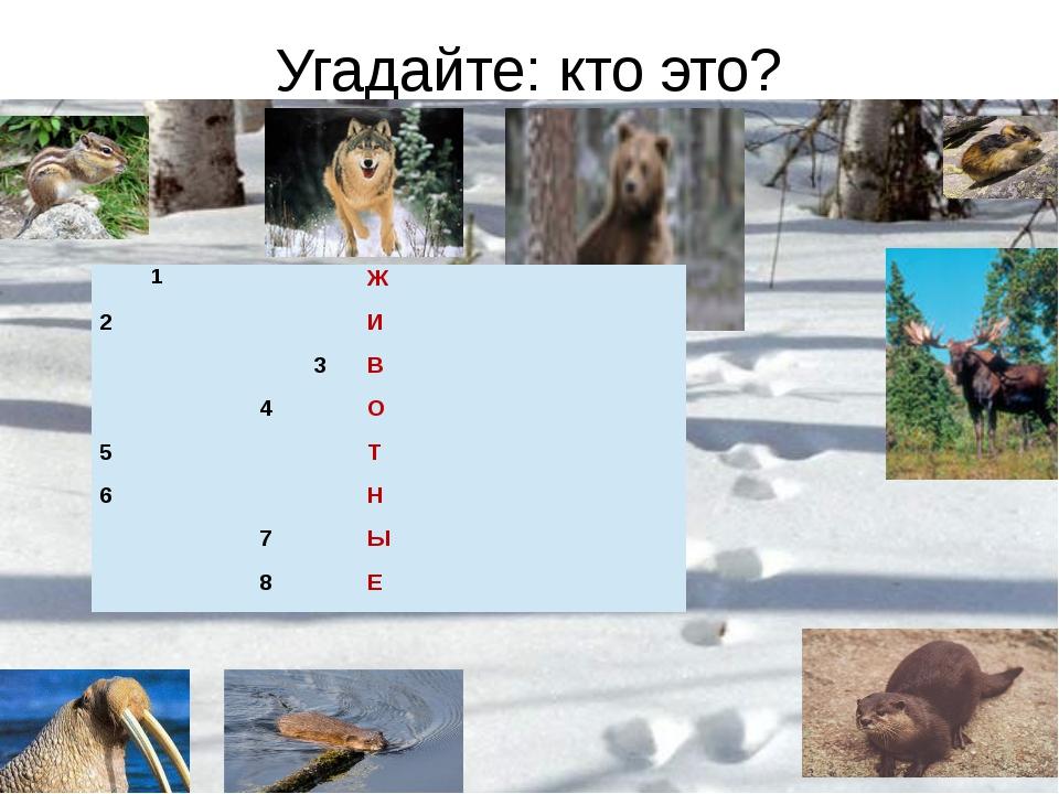 Угадайте: кто это? 1 Ж 2 И 3 В 4 О 5 Т 6 Н 7 Ы 8 Е