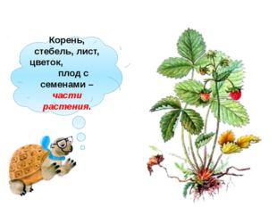Корень, стебель, лист, цветок, плод с семенами – части растения.