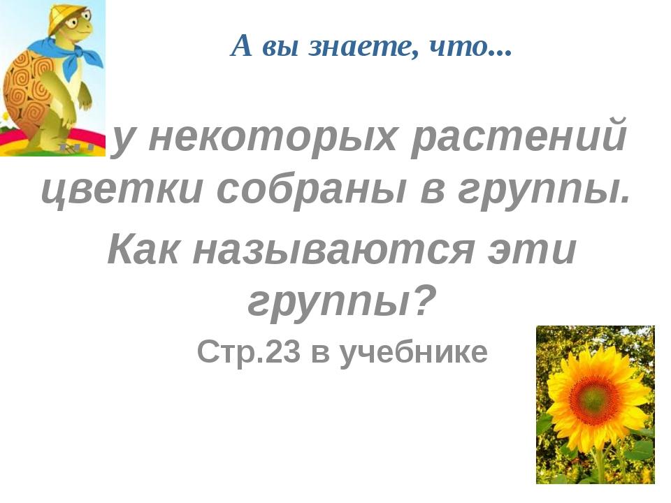 А вы знаете, что... … у некоторых растений цветки собраны в группы. Как назыв...