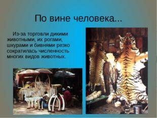 По вине человека... Из-за торговли дикими животными, их рогами, шкурами и бив