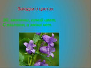 Загадки о цветах Эй, звоночки, синий цвет, С язычком, а звона нет.