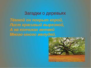 Загадки о деревьях Тёмной он покрыт корой, Лист красивый вырезной, А на кончи