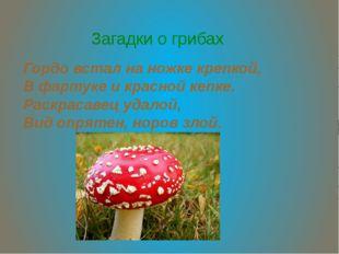 Загадки о грибах Гордо встал на ножке крепкой, В фартуке и красной кепке. Рас