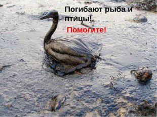 Погибают рыба и птицы! Помогите!