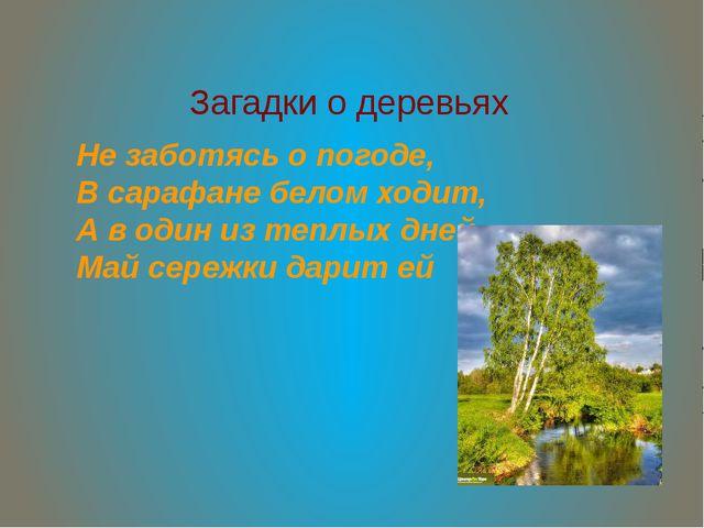 Загадки о деревьях Не заботясь о погоде, В сарафане белом ходит, А в один из...