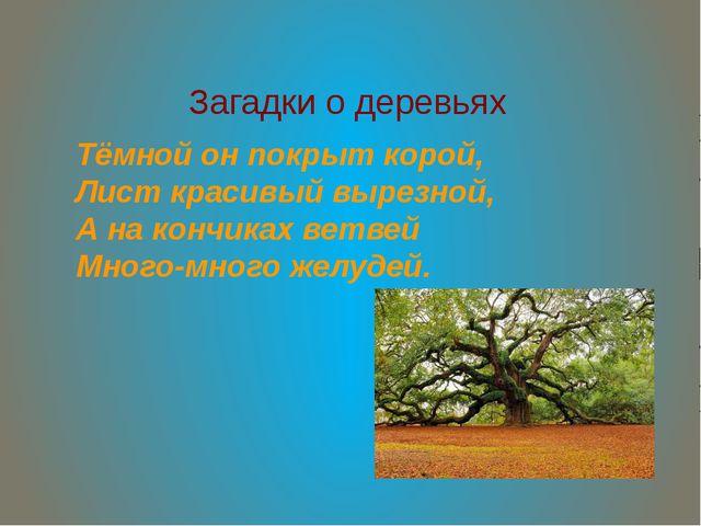 Загадки о деревьях Тёмной он покрыт корой, Лист красивый вырезной, А на кончи...