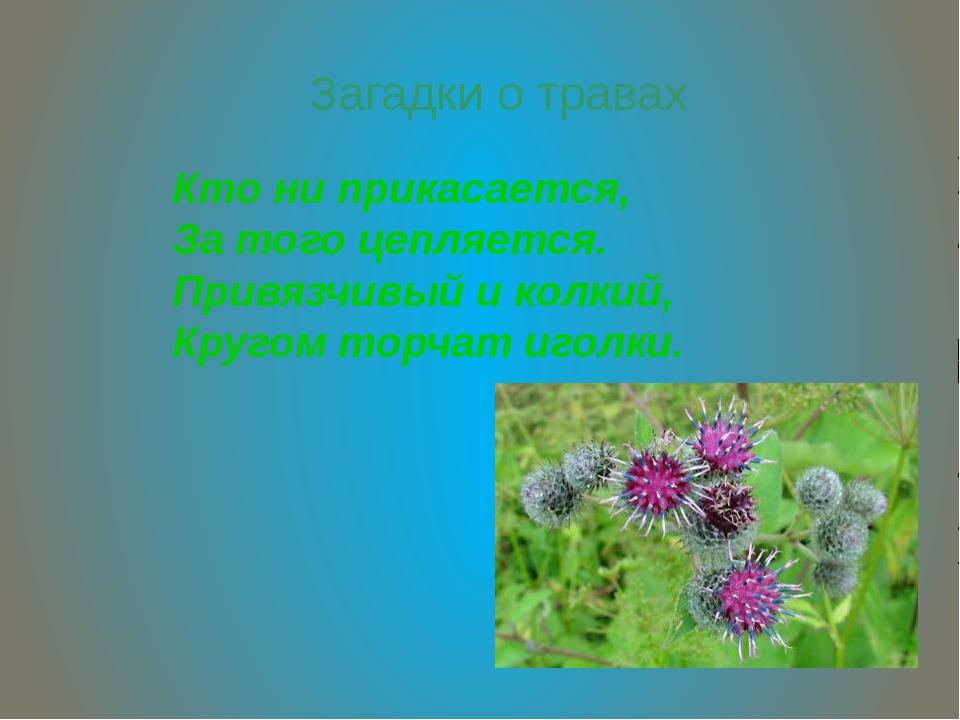 Загадки о травах Кто ни прикасается, За того цепляется. Привязчивый и колкий,...