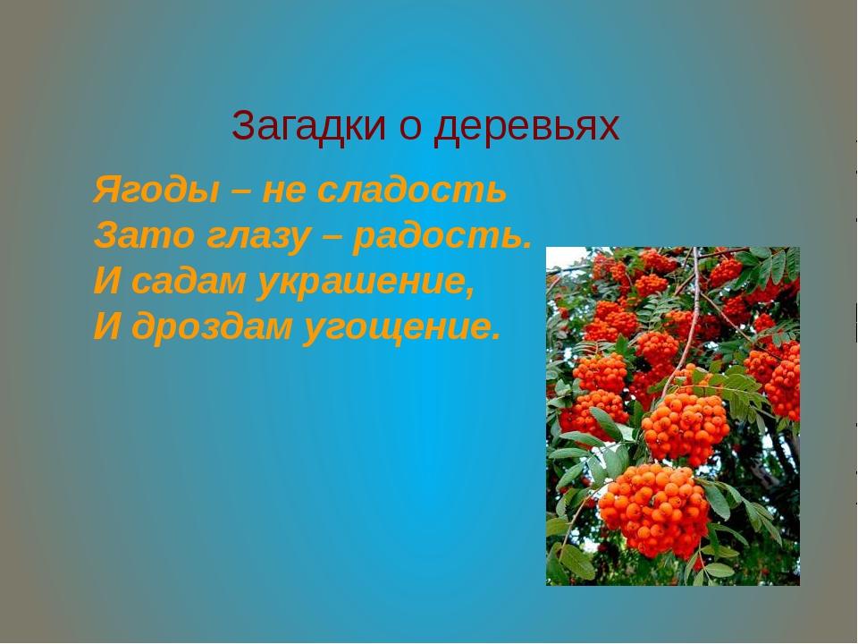 Загадки о деревьях Ягоды – не сладость Зато глазу – радость. И садам украшени...