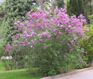 http://florapedia.ru/media/pic_full/0/294.jpg