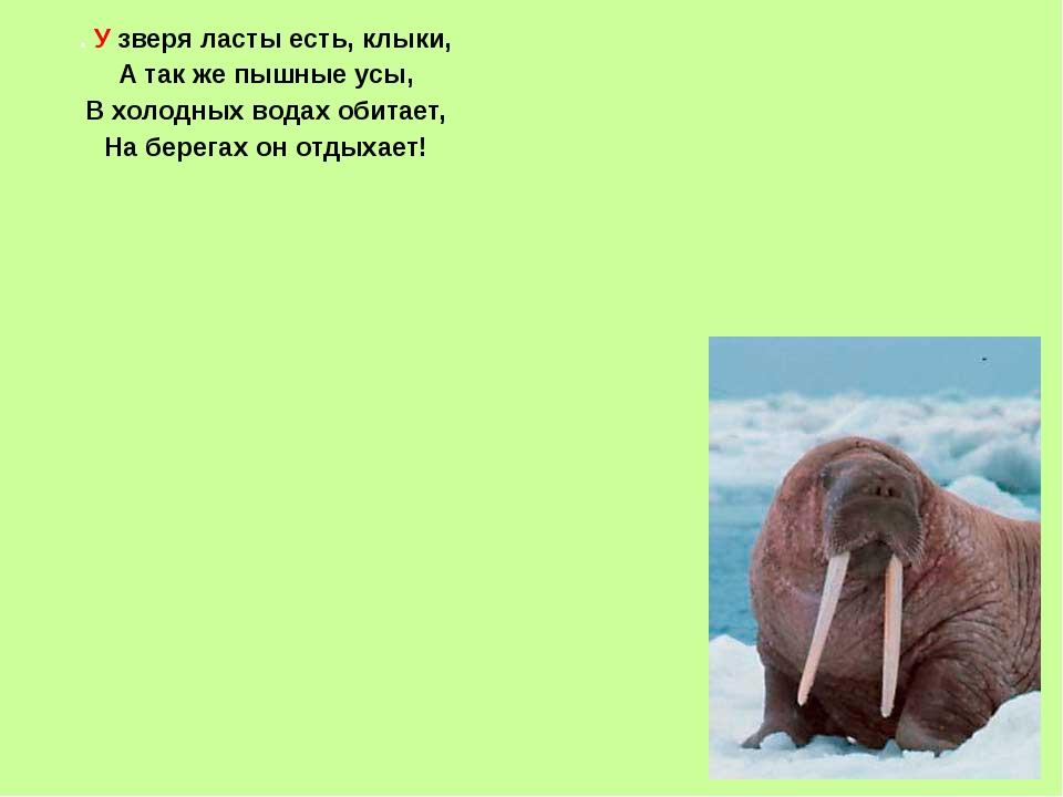 . Узверя ласты есть, клыки, А так же пышные усы, В холодных водах обитает, Н...