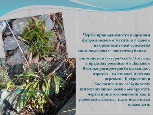 Многоножка уссурийская Черты принадлежности к древним флорам можно отметить и