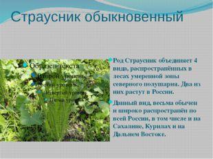 Страусник обыкновенный Род Страусник объединяет 4 вида, распространённых в ле