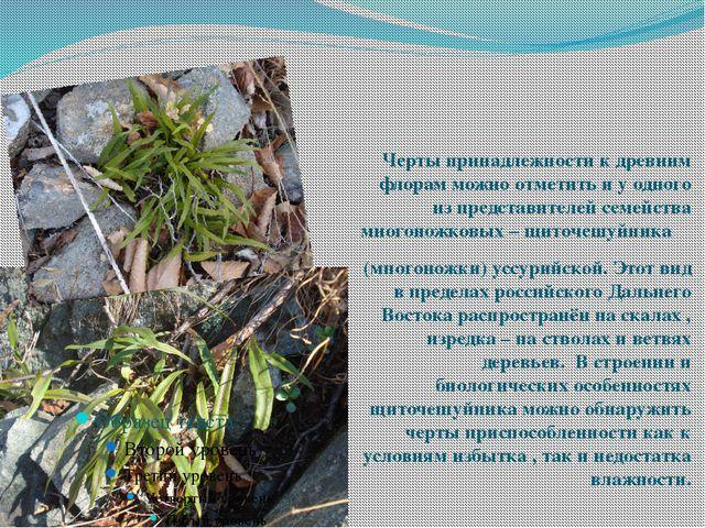 Многоножка уссурийская Черты принадлежности к древним флорам можно отметить и...