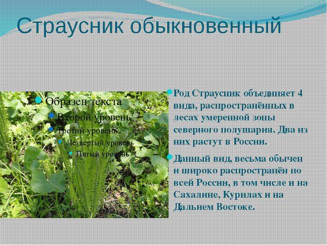 Страусник обыкновенный Род Страусник объединяет 4 вида, распространённых в ле...