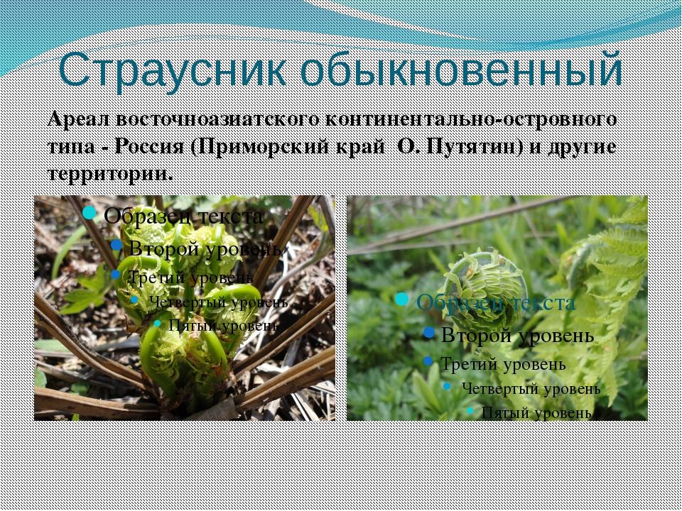 Страусник обыкновенный Ареал восточноазиатского континентально-островного тип...