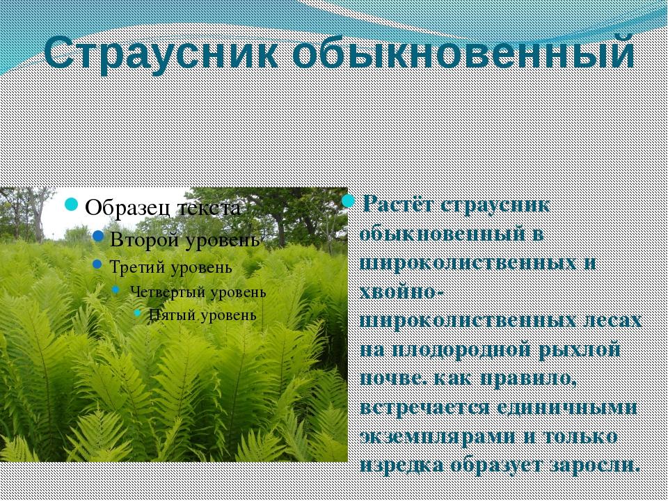 Страусник обыкновенный Растёт страусник обыкновенный в широколиственных и хво...