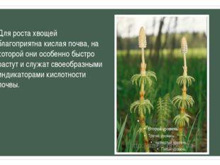 Для роста хвощей благоприятна кислая почва, на которой они особенно быстро ра