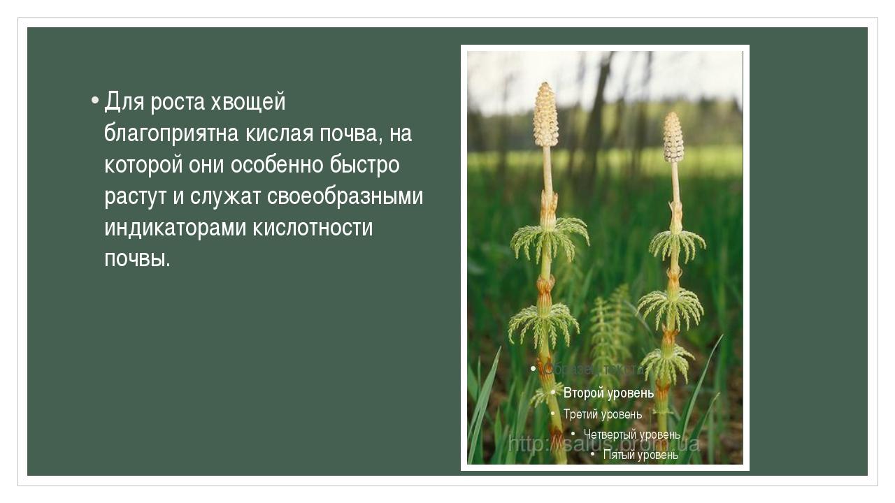 Для роста хвощей благоприятна кислая почва, на которой они особенно быстро ра...