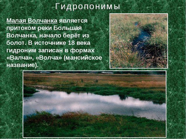 Малая Волчанка является притоком реки Большая Волчанка, начало берёт из болот...