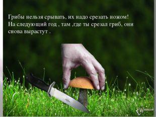 Грибы нельзя срывать, их надо срезать ножом! На следующий год , там ,где ты