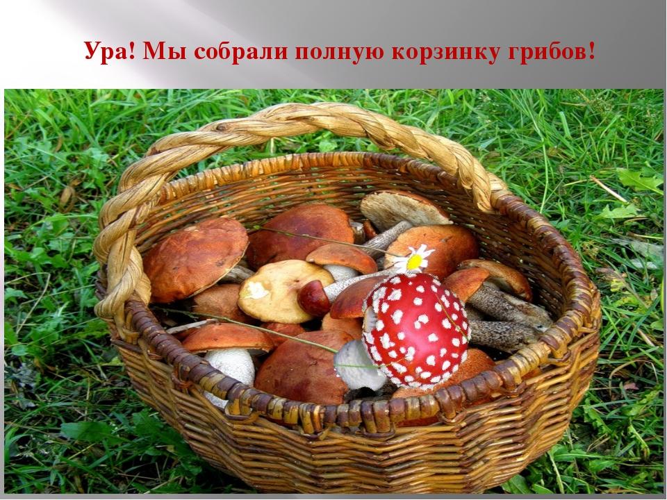 Ура! Мы собрали полную корзинку грибов!