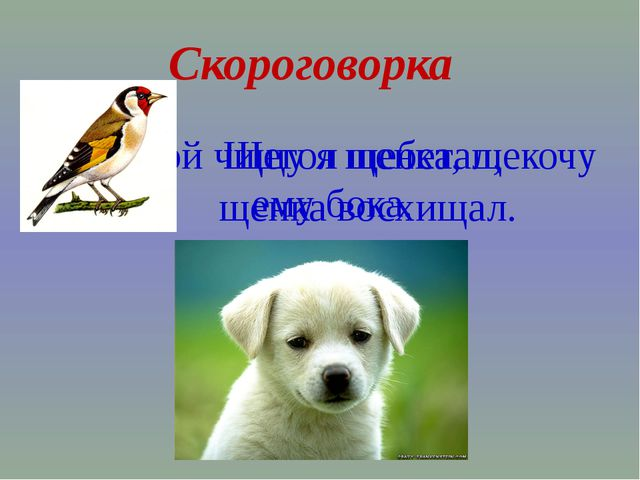 Скороговорка Щёткой чищу я щенка, щекочу ему бока. Щегол щебетал, щенка восхи...