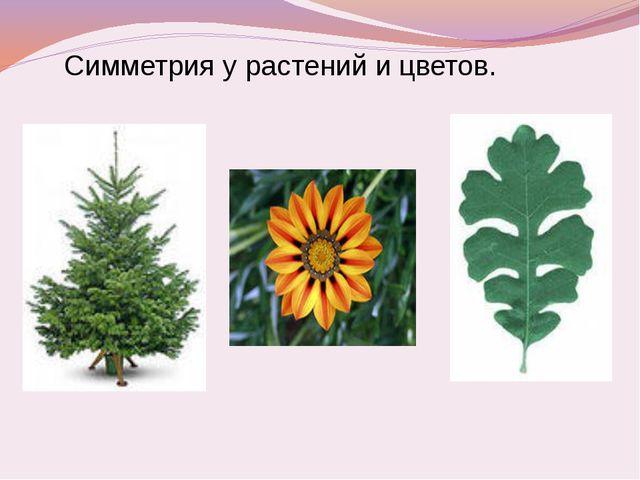 Симметрия у растений и цветов.