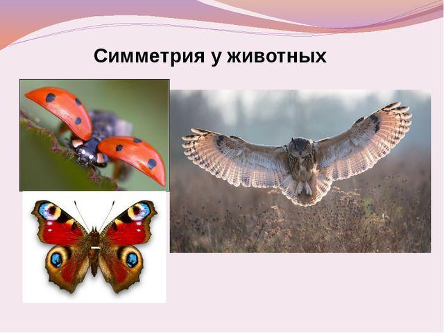 Симметрия у животных