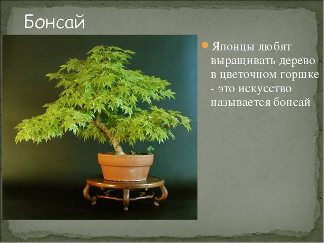 Японцы любят выращивать дерево в цветочном горшке - это искусство называется...