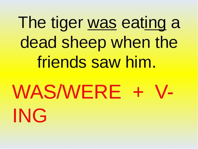 WAS/WERE + V-ING The tiger was eating a dead sheep when the friends saw him.