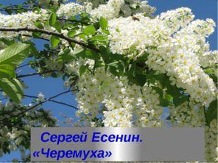 Сергей Есенин. «Черемуха»