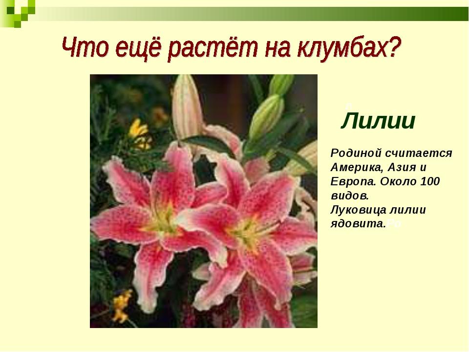 л Лилии Родиной считается Америка, Азия и Европа. Около 100 видов. Луковица л...