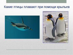 Какие птицы плавают при помощи крыльев