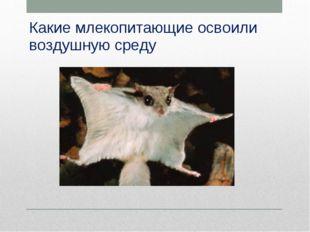Какие млекопитающие освоили воздушную среду