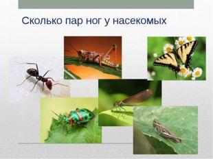 Сколько пар ног у насекомых