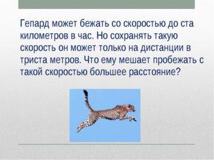Гепард может бежать со скоростью до ста километров в час. Но сохранять такую