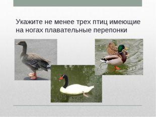 Укажите не менее трех птиц имеющие на ногах плавательные перепонки