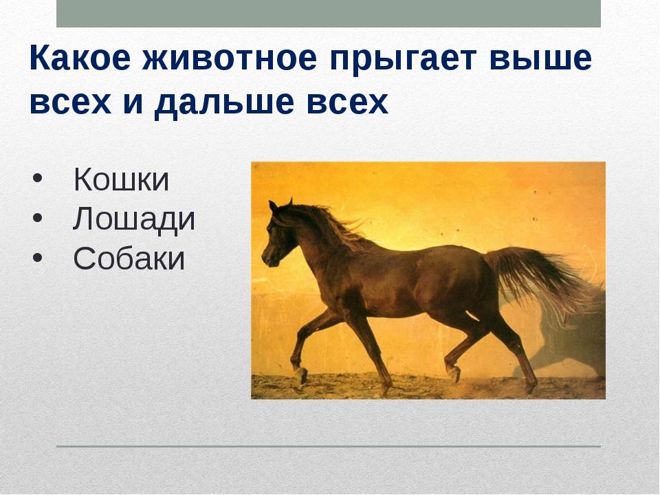 Какое животное прыгает выше всех и дальше всех Кошки Лошади Собаки